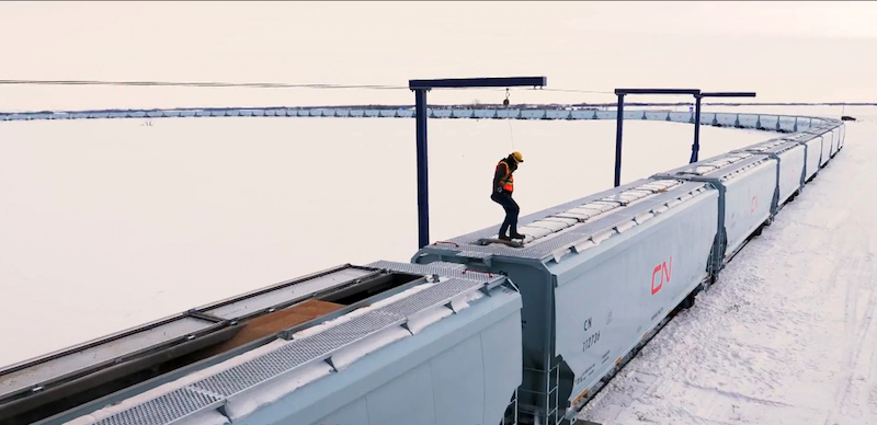 Worker standing on CN grain car filling with grain